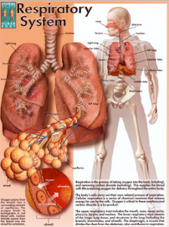 Legionnaires' disease is a lung infection