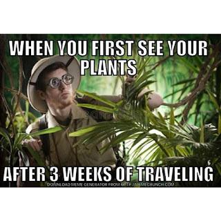 Roślinne kawały