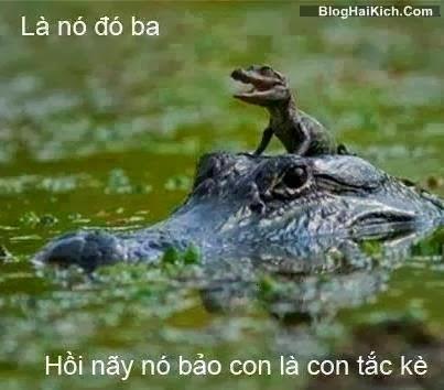 Ảnh chế cá sấu, tắc kè hài hước