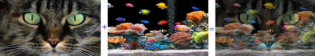 Fusão do gato com o aquário