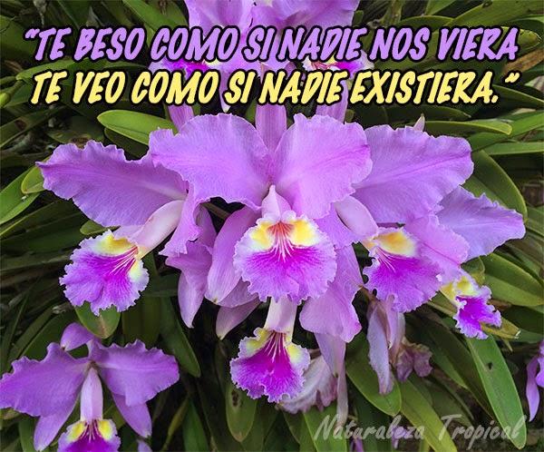 Te beso como si nadie nos viera y te veo como si nadie existiera. Flor Orquídea