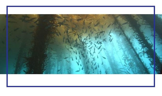 Το υποβρύχιο δάσος με τα αιώνια κυπαρίσσια