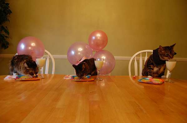 Cats Birthday Parties Damn Cool Pictures