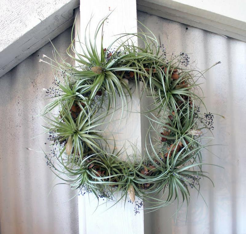 Plantas aéreas, perfectas para tu decoración de estilo nórdico by Habitan2 | Plantas que no necesitan tierra y apenas agua para vivir: plantas aéreas