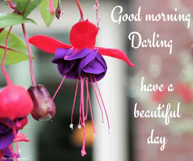 have a beautiful day darling