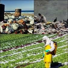 Os principais poluentes do solo são fertilizantes e os defensivos agrícolas