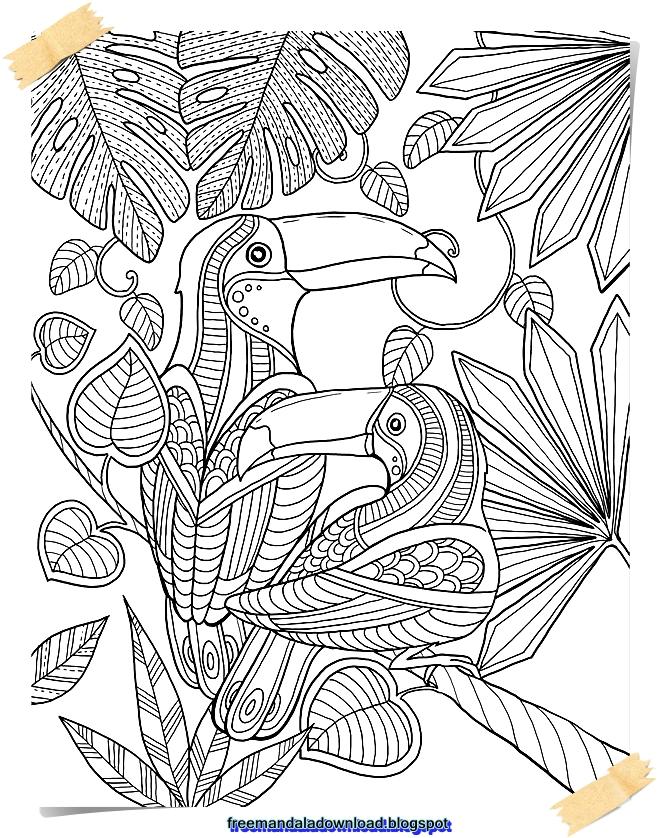 vogelmandala  free mandala