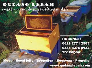 gudang lebah menjual madu asli dibanyumanik semarang