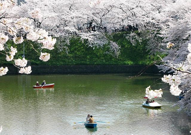 musim semi di jepang
