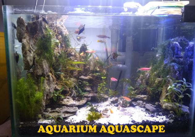 Sukaaquascape Cara Membuat Aquascape Untuk Pemula