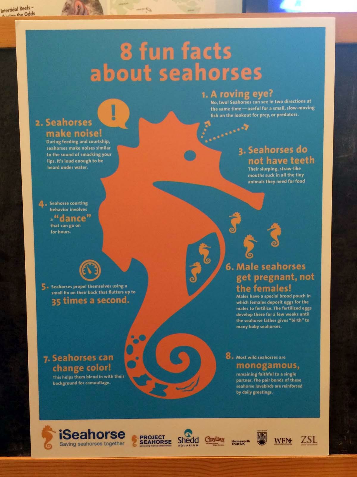 Seahorses are cool fishes!