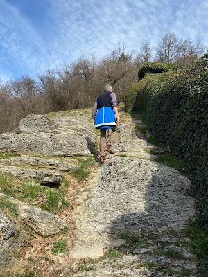 Climbing up through a roccolo - near Bergamo.