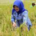 Degradasi Lahan Yang terus Terjadi, Membuat Sektor Pertanian Tak Dilirik Lagi.
