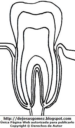 Dibujo del diente para colorear, pintar o imprimir. Gráfico del diente de Jesus Gómez