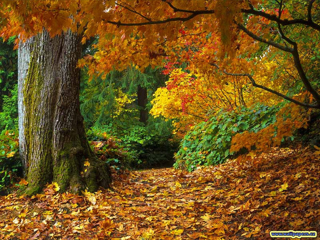 Autumn Wallpapers Widescreen