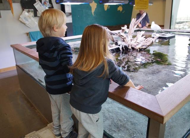 Mehr übers Meer lernen: Das Ostsee Info-Center in Eckernförde (+ Verlosung). Im Fühlbecken dürfen auch Kinder die Fische und Meerestiere anfassen und streicheln.