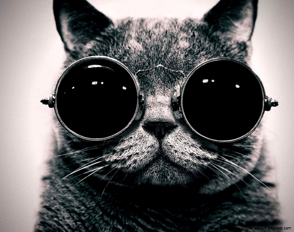 Cool Black And White Animal Pictures | Amazing Wallpapers