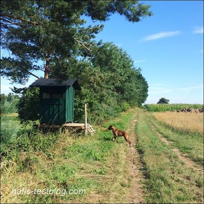 Unterwegs zwischen Feldern