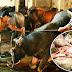 Rợn người chuyện kể gia đình 4 người làm nghề giết trâu 20 năm chết thê thảm vì bị nghiệp báo (kỳ 1)
