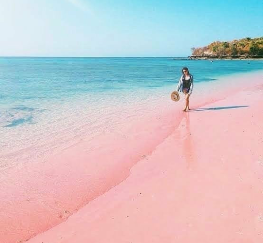 Tiket Masuk dan Rute Menuju Pantai Pink Pulau Lombok