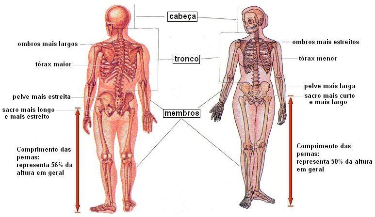 5a51e3d83 A figura abaixo apresenta algumas considerações anatômicas entre homens e  mulheres que explicam a diferença de desempenho em alguns esportes.