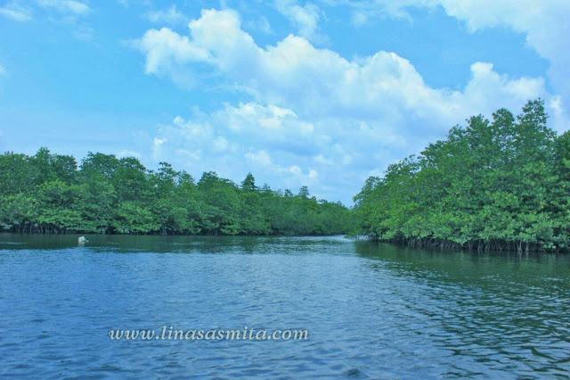 Hutan bakau atau mangrove