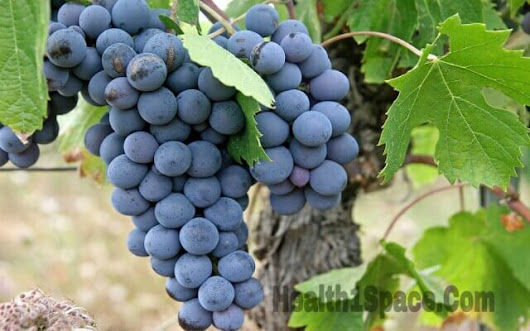 Healthy Advantages of Black Grapes | Black Grapes Benefits | Grapes And Nutrition
