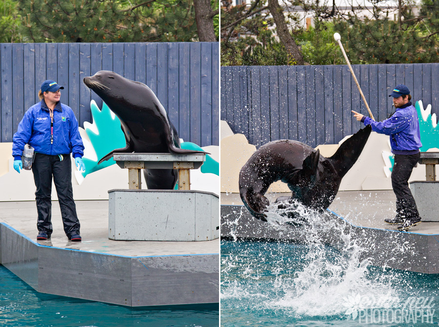 Aquatheater: Sea Lion Show