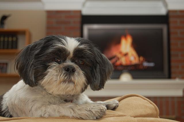 Blog Sklepu Kocimiętka Jak Ustrzec Psa Przed Kradzieżą