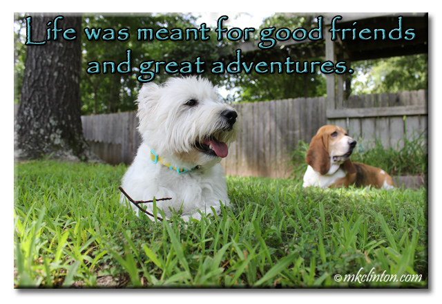 Westie and basset relaxing in yard with life quote printed above