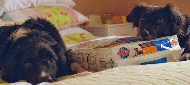 hills-dog-food