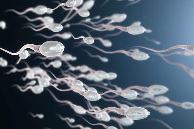 perbedaan air mani dan sperma