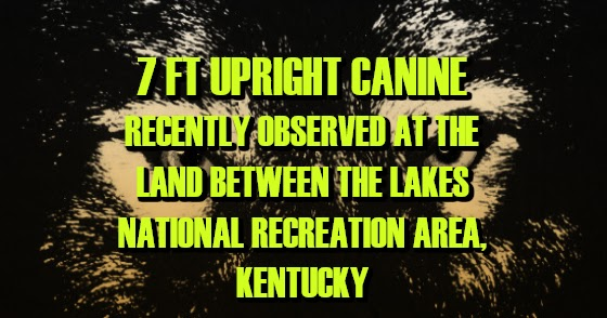 7 Ft Upright Canine Recently Observed at the Land Between the Lakes National Recreation Area, Kentucky