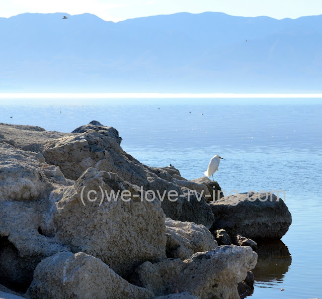 The egret rests on the rock at the point in the state park.