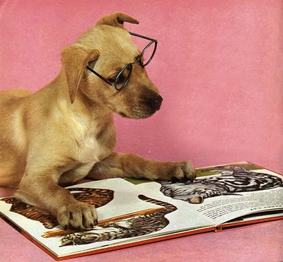 Writing is the Annoying (Adorable?) Puppy You Can't Ignore ... |Puppy Reading