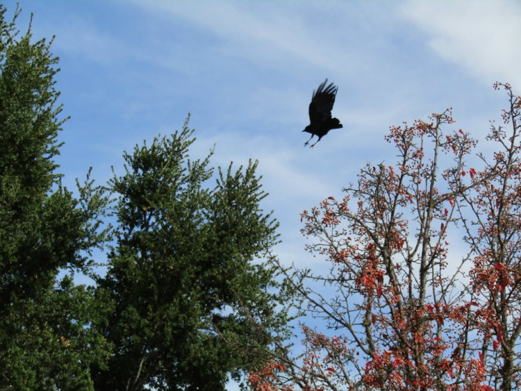 Watching a Crow Decide Whether to Stay or Fly Away: Photos from a Nature Walk