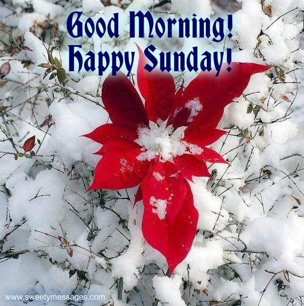 Good Morning And Happy Sunday Msg : Good morning and happy sunday images beautiful messages