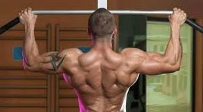 8 Tips Cara Membentuk Otot Sayap Dengan Cepat zonapelatih