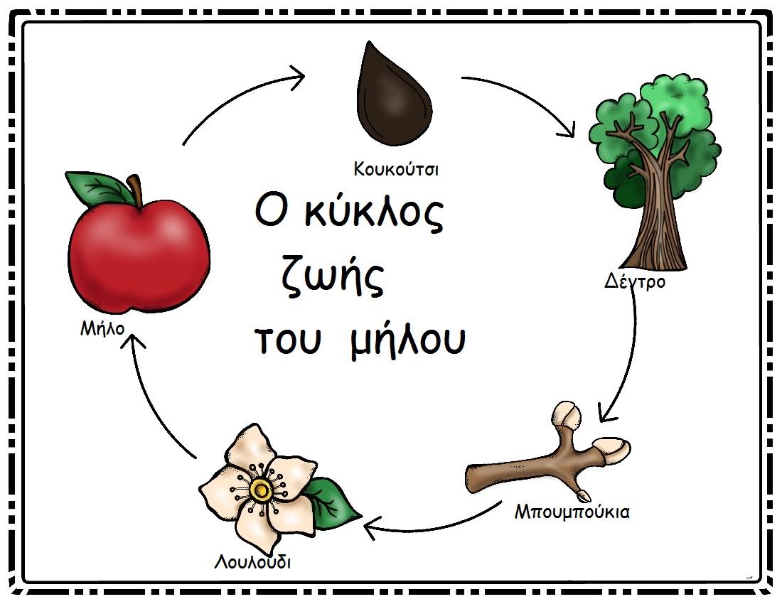 Αποτέλεσμα εικόνας για το αγαπημένο μου μήλο νηπιαγωγείο