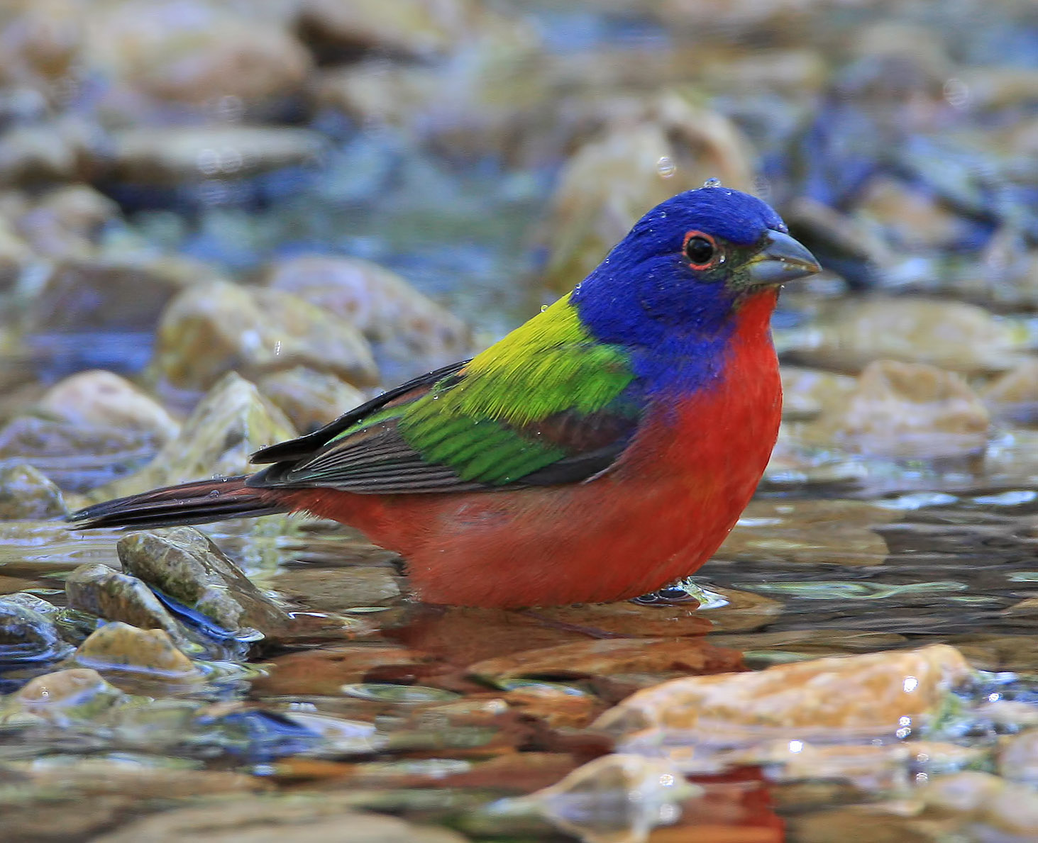 Amazing World & Fun: The Most Colorful birds On the Earth - photo#41
