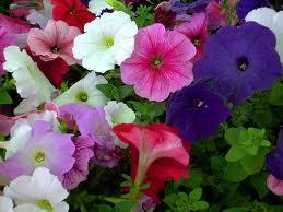 اختيار نباتات الزينة للديكور الداخلي