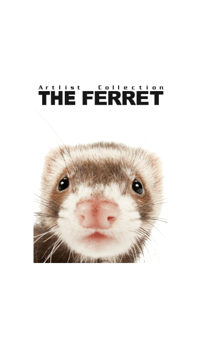 Artlist Collection THE FERRET
