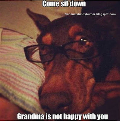 old-wise-dog-come-sit-down-grandma-not-happy-with-you