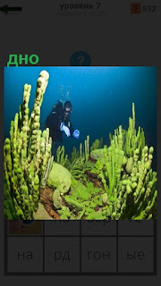 Морское дно, где плавает аквалангист и водоросли растут