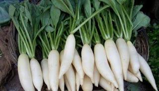 Manfaat Lobak Putih Untuk Asam Urat