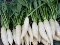 23 Manfaat Lobak Putih Untuk Asam Urat dan Batu Ginjal