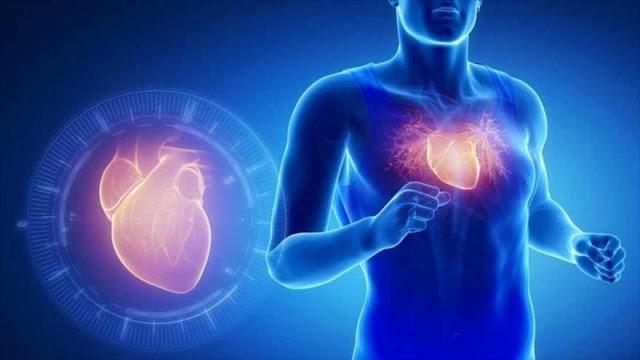 Descubren proteína que imita efectos del ejercicio en el corazón