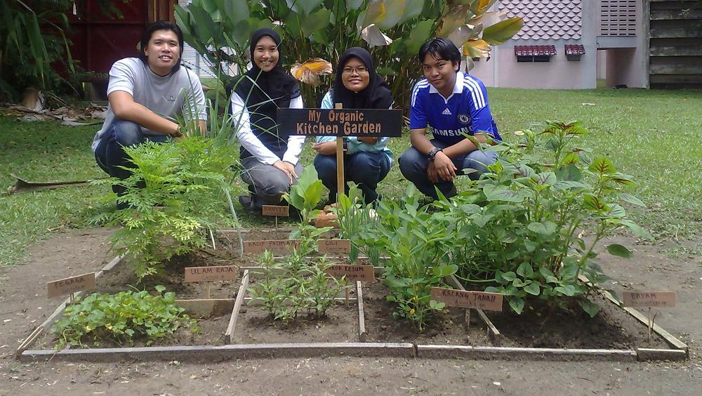 Projek My Organic Kitchen Garden