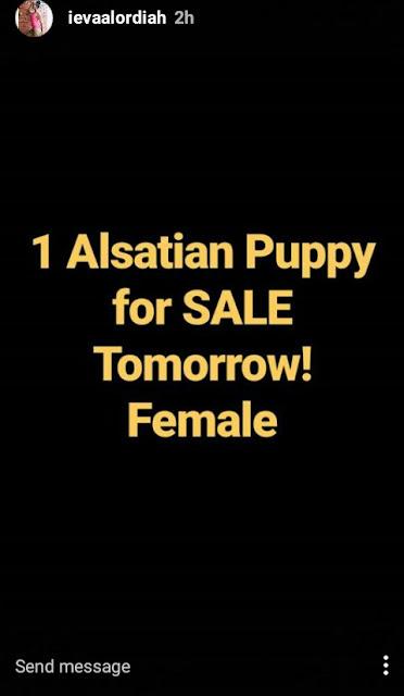 Eva Alordiah turns dog merchant