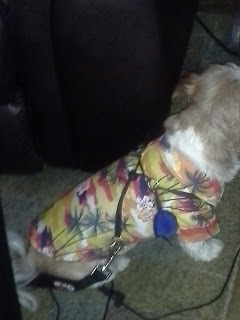 hawaiian shirt for dogs Icicle showing off for Micha Doggy Wear